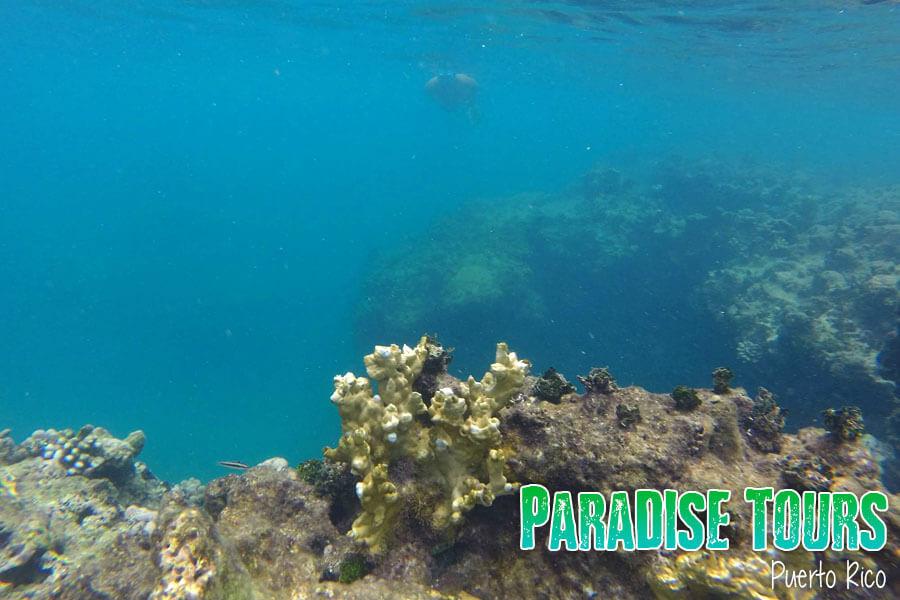snorkeling puerto rico
