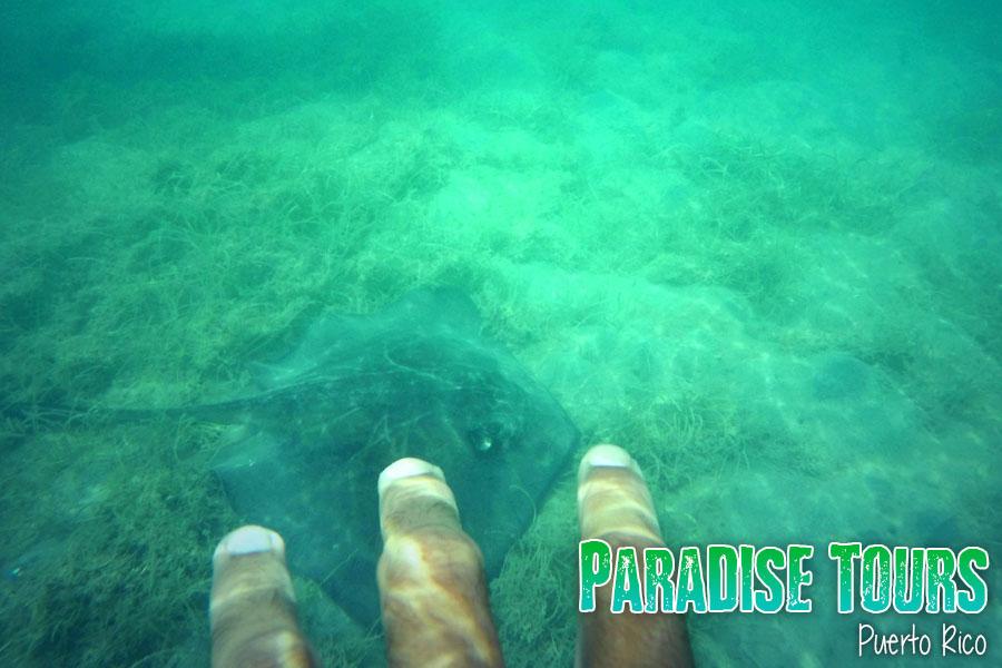 snorkeling-puerto-rico